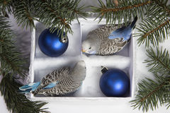 Christmas gift, two small bird Royalty Free Stock Images