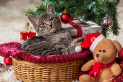 Christmas gifts and kitten under the tree Royalty Free Stock Photo