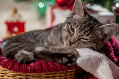 Christmas gifts and kitten under the tree Royalty Free Stock Image