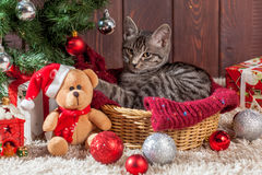 Christmas gifts and kitten under the tree Stock Photography