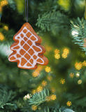 Christmas gingerbread cookie hanging on branch. Stock Images