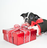 Christmas Giving Royalty Free Stock Photos