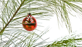 Christmas glass globe pine branch isolated Royalty Free Stock Photography