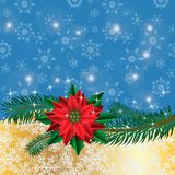 Christmas golden background with poinsettia flowers and fir branches Stock Photography