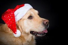 Christmas Golden Retriever Royalty Free Stock Photos