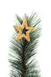 Christmas golden star on a christmas branch Royalty Free Stock Photos