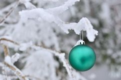 Christmas gree and white Royalty Free Stock Photography