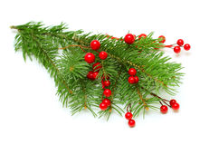 Christmas green branch with red berry. Isolated on white royalty free stock photo