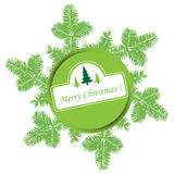 Christmas green fir branches Stock Image