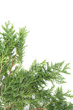 Christmas green framework Stock Photography