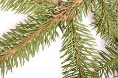 Christmas green framework isolated on white background Royalty Free Stock Photos