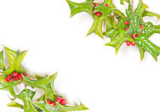 Christmas green holly berry framework Stock Image