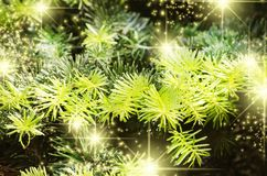 Christmas Green Pine Tree Background Royalty Free Stock Photo