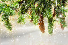 Christmas green spruce branches with cones Stock Photos