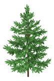Christmas green spruce fir tree isolated Stock Photos