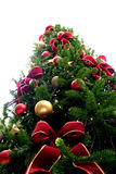 Christmas green tree Stock Photo