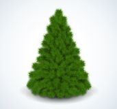 Christmas green tree. Realistic  illustration. Royalty Free Stock Photography