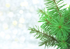 Christmas green tree on shiny background with copy space for tex Stock Photography