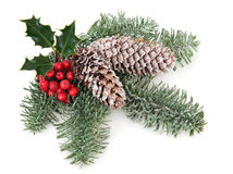 Christmas Greenery Stock Images