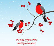 Christmas greeting with birds sitting on branch Stock Photo
