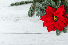 Christmas greeting card background. Red Christmas flower on traditional white wood background for greeting card