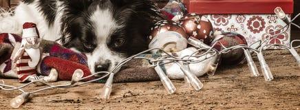 Christmas greeting card  bored dog Stock Photo
