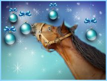 Christmas greeting card with brown horse Royalty Free Stock Images