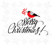 Christmas Greeting Card with bullfinch and handdrawn lettering. Stock Photo