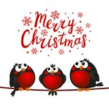 Christmas greeting card with bullfinches. Christmas greeting card with cute bullfinches Vector Illustration