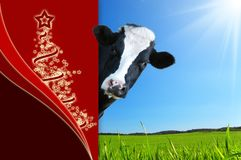 Dairy cow Christmas greetings with space for text
