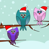 Christmas greeting card with owls Stock Photos