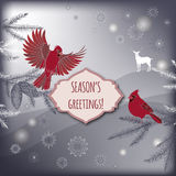 Christmas greeting card with pine branch, cardinal Royalty Free Stock Image
