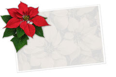 Christmas greeting card poinsettia decoration with copy space Royalty Free Stock Photos