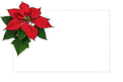 Christmas greeting card poinsettia decoration with copy space Stock Images