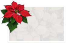 Christmas greeting card poinsettia decoration with copy space Stock Photo