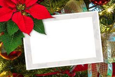 Christmas greeting card poinsettia decoration with copy space Stock Image