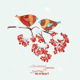 Christmas greeting card with robins, birds, rowan branch. Royalty Free Stock Images