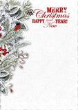 Christmas Greeting Card with snowy branches and bullfinch Stock Image