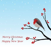Christmas Greeting With Red Robin Sitting On Branch. Vector Illustration Stock Photo