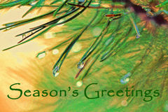 Christmas Greeting with Spruce Tree Needles and Dew Drops Royalty Free Stock Image