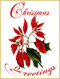 Christmas greetings. royalty free stock photo