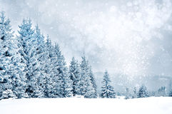 Christmas greetings background with snowflakes and fir trees Stock Image