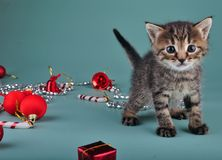 Christmas group portrait of kitten royalty free stock photography