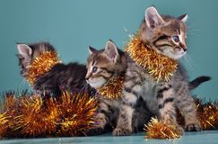 Christmas group portrait of kittens royalty free stock photography
