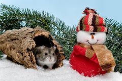 Christmas hamster royalty free stock photo