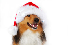 Christmas happy dog Stock Photos