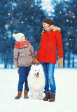 Christmas happy family, mother and son child walking with white Samoyed dog on snow in winter day Stock Photos