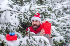 Christmas happy man hold present box in snowy winter forest. Christmas happy man in santa hat with beard hold present box at xmas tree in snowy winter forest stock photo