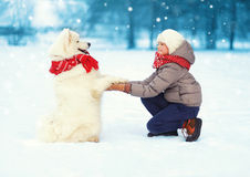 Christmas happy teenager boy playing with white Samoyed dog on snow in winter day, positive dog gives paw child Stock Photos