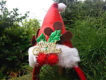 Christmas hat hang on a branch on a tree. Christmas red hat hang on a branch on a tree Royalty Free Stock Image